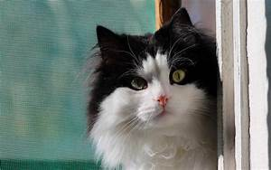 Cute little black and white cat wallpapers and images ...