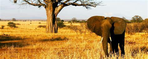 Experience Being On Safari In Tarangire, Tanzania   Art Of ...