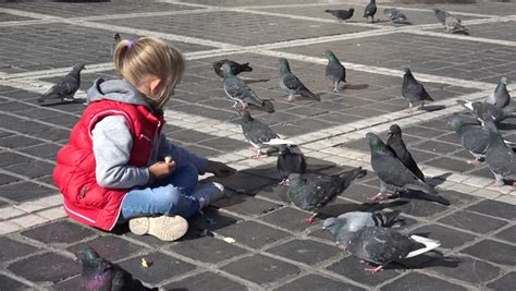 4k child feeding pigeons with bread crumbs in a town