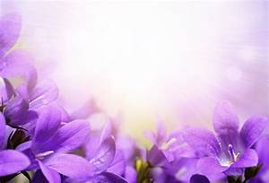 Real Purple Flowers Backgrounds