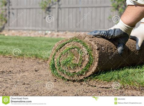 putting in a new lawn installing new lawn stock photography image 33543282