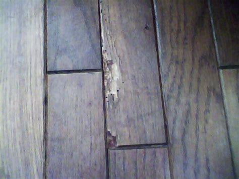 Cupping Engineered Wood Floors by Engineered Hardwood Cupping Engineered Hardwood