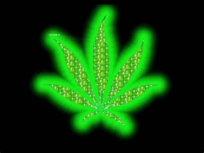 Cannabis Chezmanima Drogues Autres Comme Vert Servez