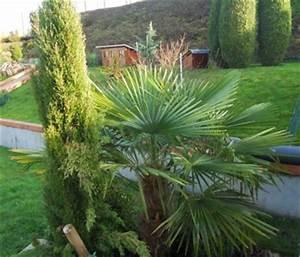 Phoenix Canariensis Entretien : les palmiers inspirations desjardins ~ Melissatoandfro.com Idées de Décoration