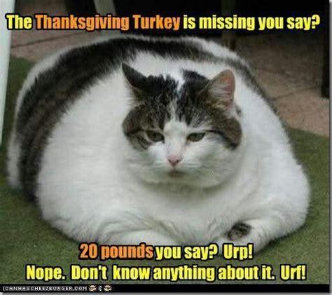 Thanksgiving Cat Meme - thanksgiving turkey humor cat meme thanksgiving fall pinterest cats thanksgiving and