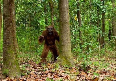 monongahela national forest bigfoot google search cryptozoologymonstersghosts bigfoot
