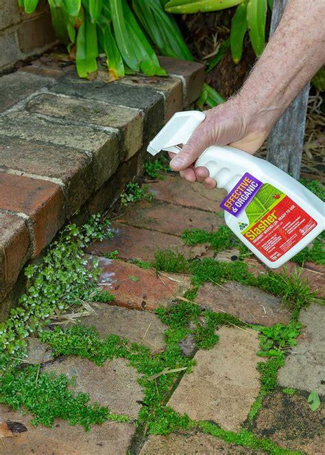 rid  weeds   garden prevention
