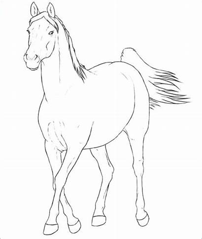 Horse Coloring Pages Arabian Horses Mare Running