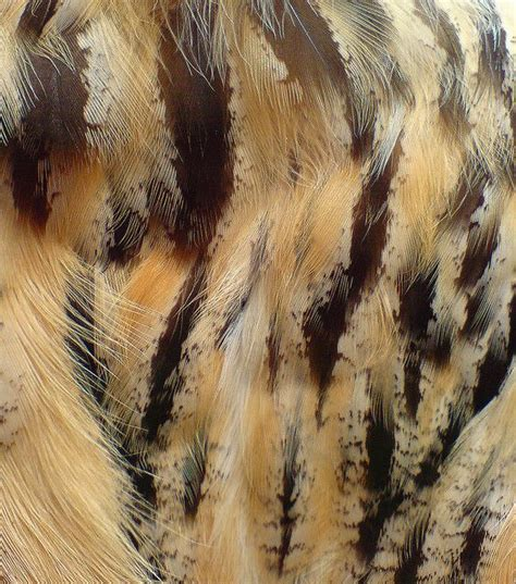 Owl Feathers Plumes Feather