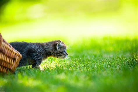 Krokus » Giftig Für Katzen?