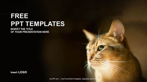 reddish kitty nature  templates
