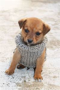 free knitting pattern for a puppy sweater sweater