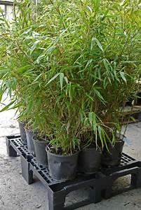 Bambus Als Sichtschutz Im Kübel : ihre pflanzenlieferung ist eingetroffen bambus pflege bambus und pflanzenshop ~ Frokenaadalensverden.com Haus und Dekorationen