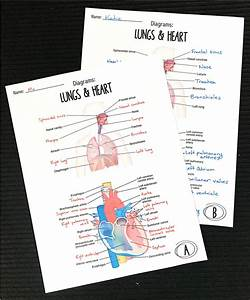Diagrams Human Body