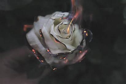 Smoke Rose Fire Wallpapers Laptop 1080p 4k
