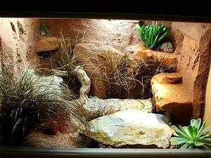 25+ best ideas about Gecko vivarium on Pinterest Gecko