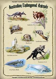60 best Biological sciences (Endangered & Vulnerable ...