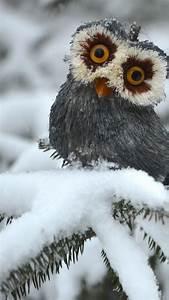 wallpaper, owl, , pines, , snow, , cute, animals, , funny, , animals, , 4742