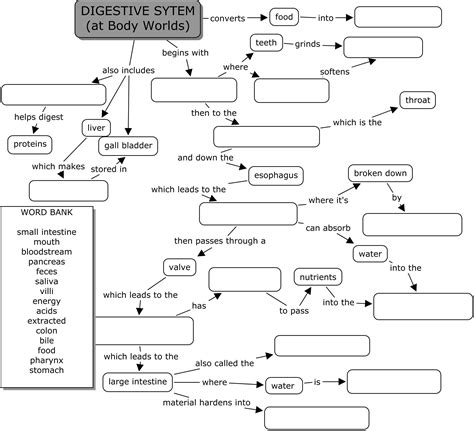 world digestive system science class