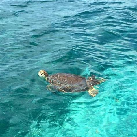 Glass Bottom Boat Tours Belize by Reef Runner Glass Bottom Boat San Pedro Belize Top