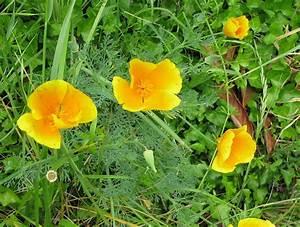Grandes Fleurs Jaunes Fleur Jaune Et Orange Brasserie Forest