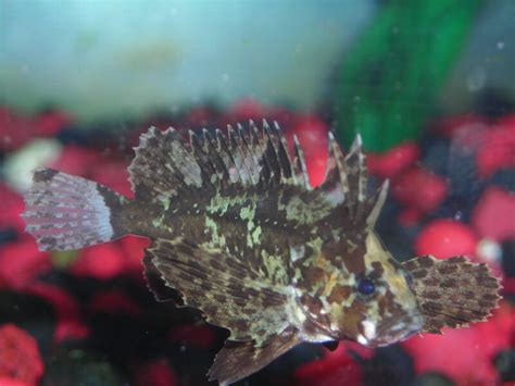 freshwater misc grouper fish butterfly tropical slideshow absolutelyfish
