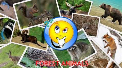 animals  kids planet earth animal sounds android