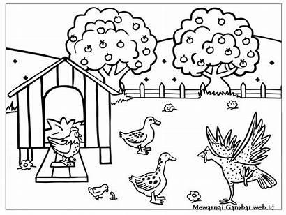 Mewarnai Gambar Ayam Bebek Goreng Anak Kelinci