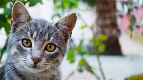cat  human years vetspets