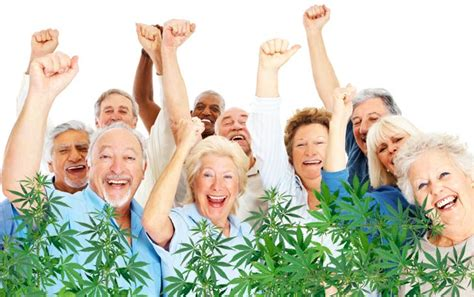 seniors cannabis senior citizens medical growing fastest users complete guide marijuana pain option study shows canada grow cbd kushfly