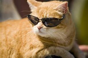 cool cat the ipkat copyright reform through competition the