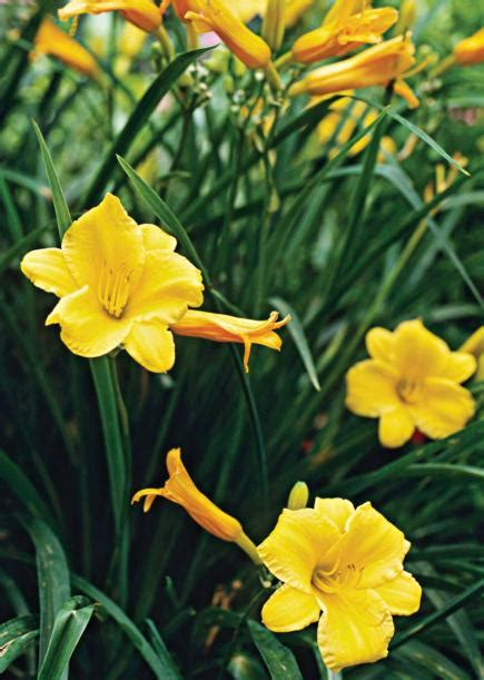25 top easy care plants for midwest gardens midwest living