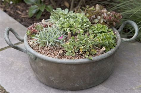 alpine pot display gardenersworld