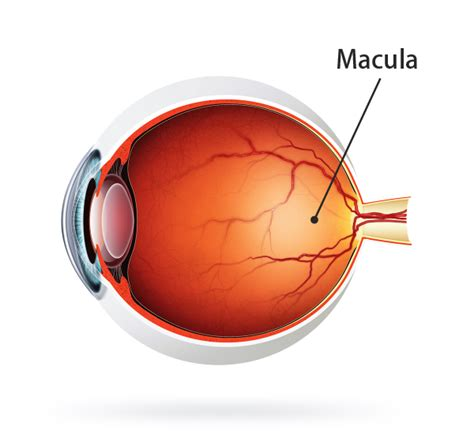 blue light macular degeneration protect yourself from macular degeneration with iris
