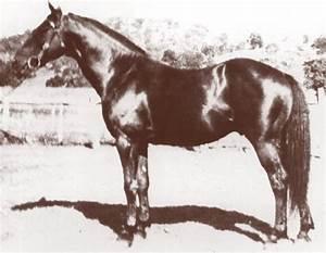 Radium  Horse
