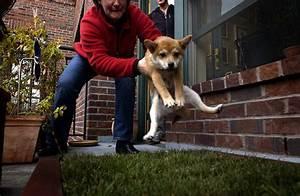 Dog house training dog training for The dog house training