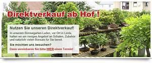 Bonsai garten online shop bonsaigestaltung krotenheerdt for Whirlpool garten mit bonsai samen shop