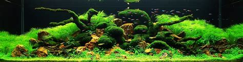 beau aquarium eau douce aquascaping les plus beaux aquariums