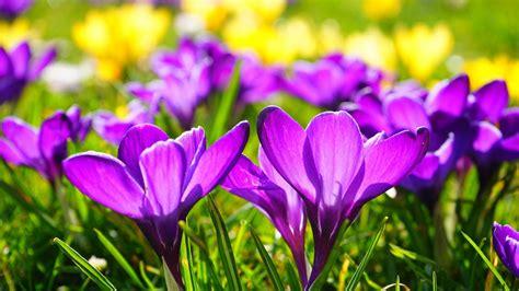Norvegiškai En vår reiškia Pavasaris | norvegu24.lt