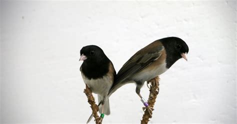 wild birds unlimited do birds attract mates with their scent