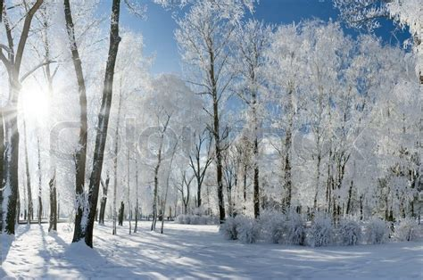 beautiful winter landscape  snow covered trees stock