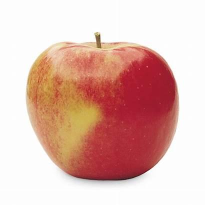 Fuji Apple Varieties Ontario Bc Fresh Early
