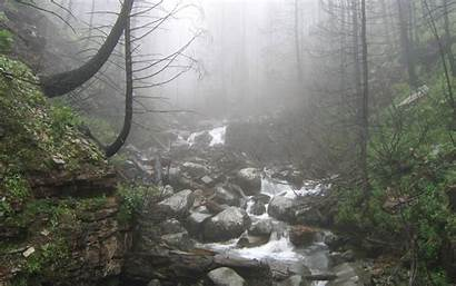 Nature Rainy Forest Wallpapers Background Windows Smells
