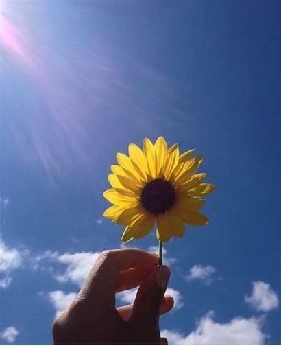 Aesthetic Sunflower Sun Wallpapers Flowers Cat
