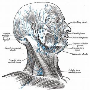 Lymphatic Anatomy of the Head and Neck