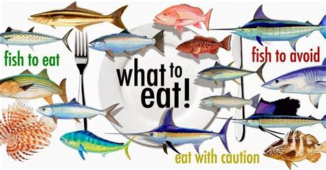 best fish to eat seafood restaurants seafood selection tips
