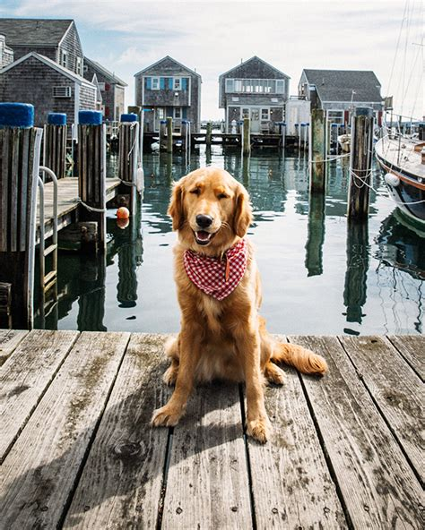Nantucket Boat Basin T Shirts by Woof Cottages Wear Pearls Bloglovin