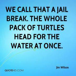 Turtles Quotes - Page 1 | QuoteHD