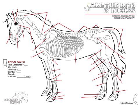 anatomy of a bone coloring 45 skull bones anatomy coloring pages anatomy human