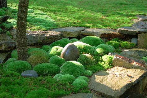 propagating moss moss and stone gardens www imgkid com the image kid has it